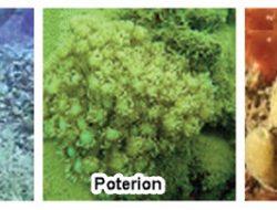 Kelompok Binatang Invertebrata Dan Vertebrata