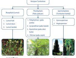 Kelompok Tumbuh Tanaman (Plantae)