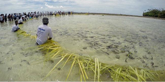Festival Mane'E Tradisi Nelayan Di Pantai Malo