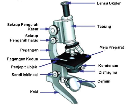 Mengenal Dan Memakai Mikroskop