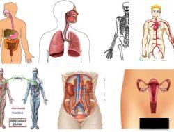 Sistem Organ Dan Organisme