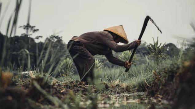 YA AMPUN : Indonesia Terancam Tak Punya Rakyat yang Mau Jadi Petani Pada 2063